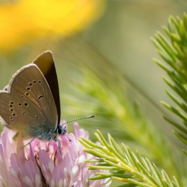 loi alur protection biodiversité