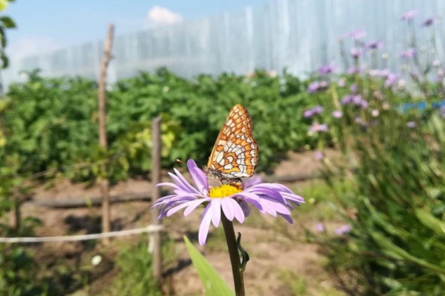 jardins partagés - Sainte Maxime
