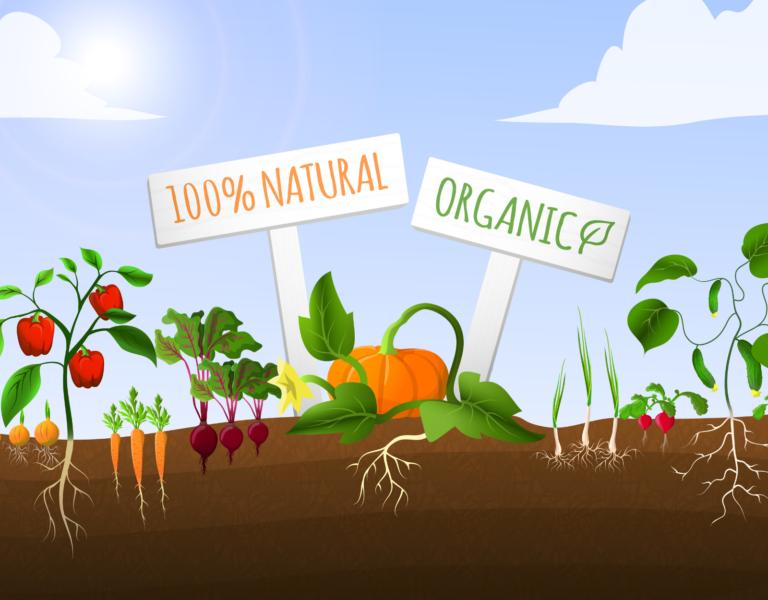 potager permaculture - légumes bio dans les cantines scolaires