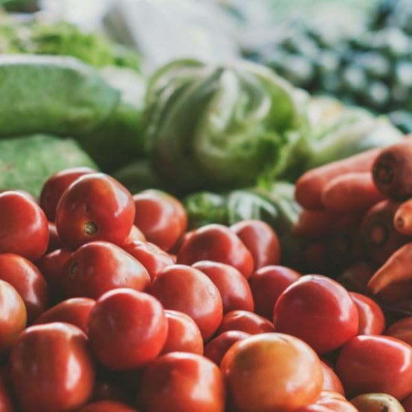 légumerie - agriculteurs et restauration collective