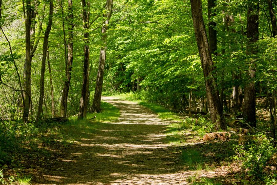 Forêt du Val d'Oise : planter pour les futurs générations